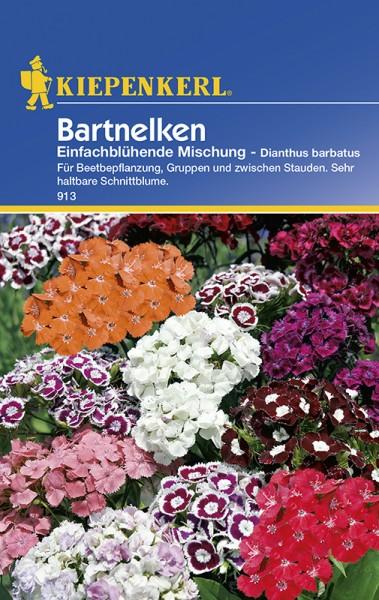 Bartnelken Dianthus einfachblühend