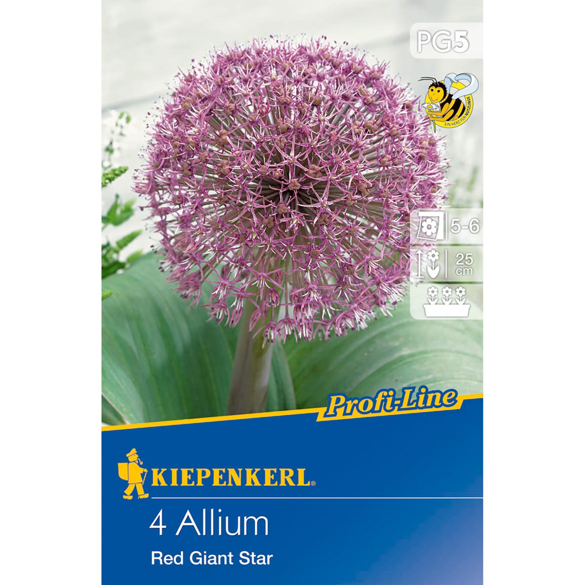Allium Red Giant Star Blumenzwiebel